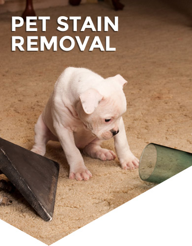 Pet Odor & Stains Removal Service